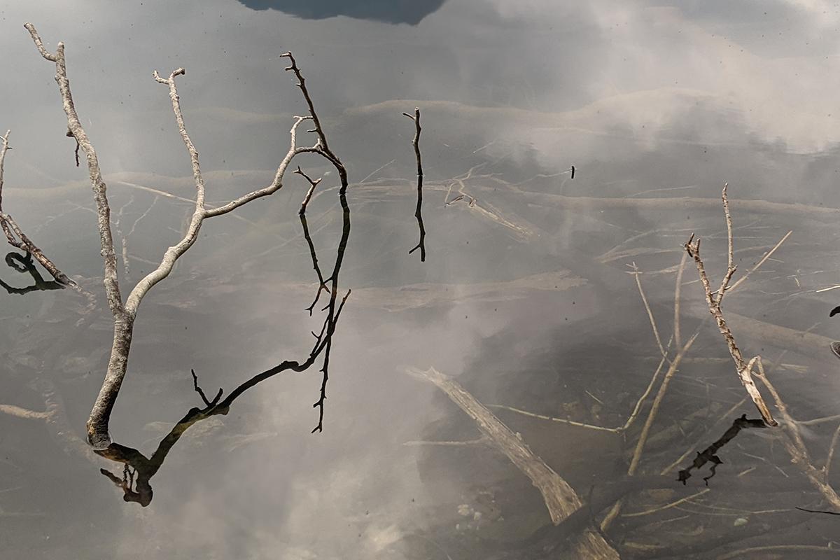 湖の中に沈む枝木