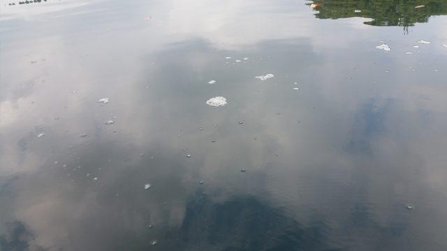 池の水が悪くて泡が残る
