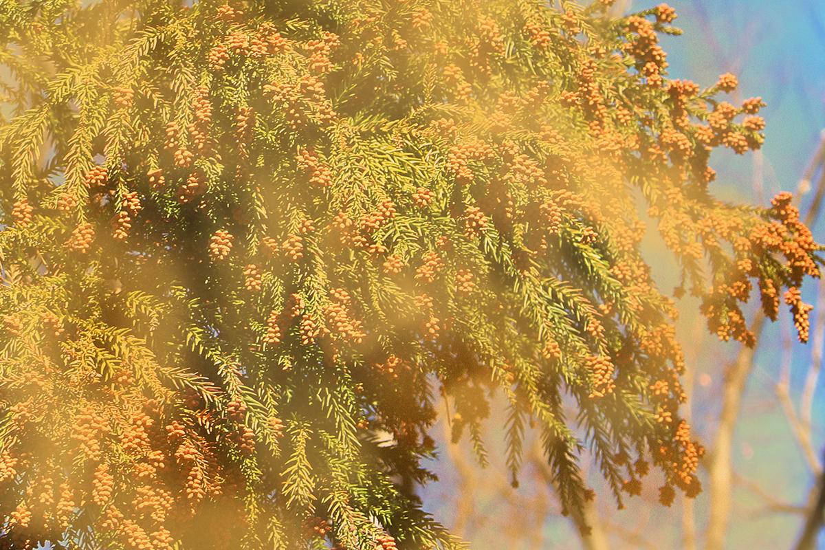 空に舞うスギ花粉