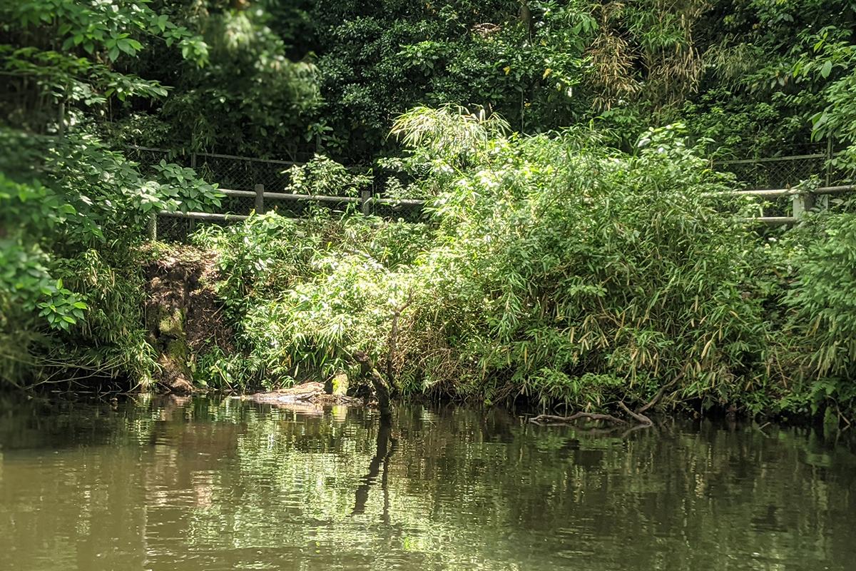 中池の遊歩道